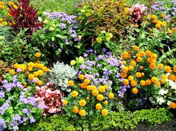 Tutto per il giardino natura e arte in mostra a for Tutto x giardino