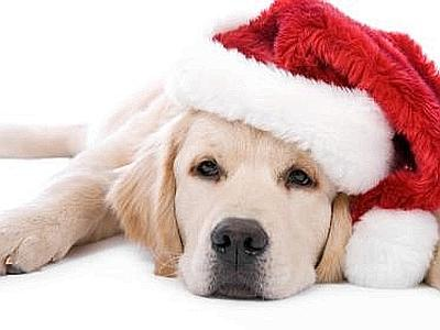 Immagini Natalizie Con Cani.I Consigli Dell Enpa Per Un Natale Cruelty Free Gazzetta