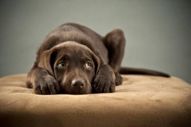 Pensabene sulla vicenda dei cuccioli di cane sequestrati