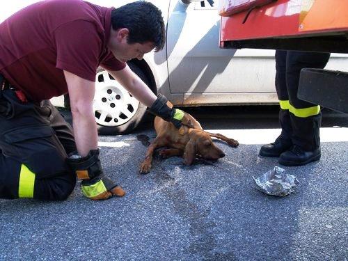 Aumentano gli incidenti stradali con animali