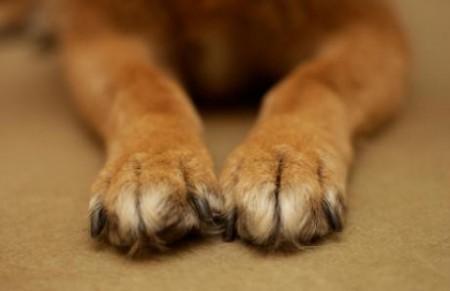 Piemonte, approvato l'elenco dei dog sitter