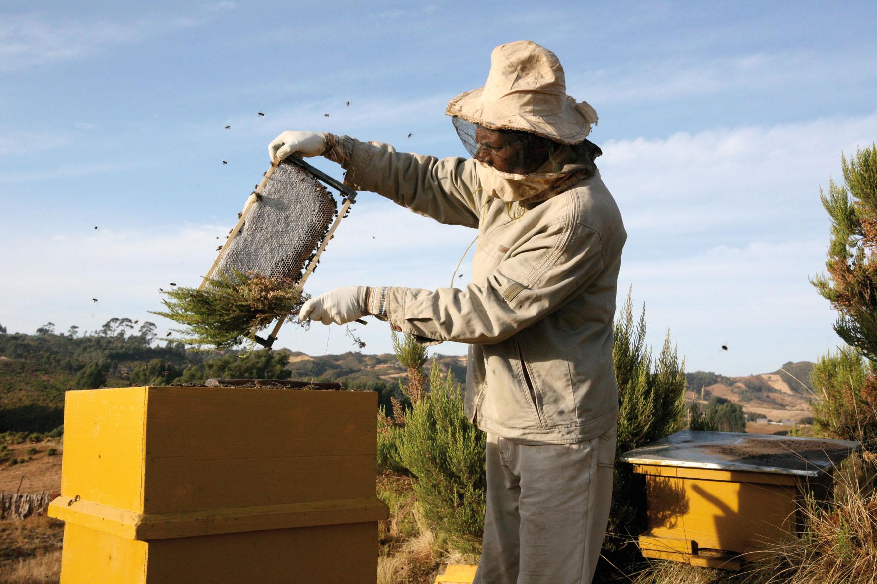 Come diventare apicoltore, corso online di Aspromiele e Coldiretti Asti,