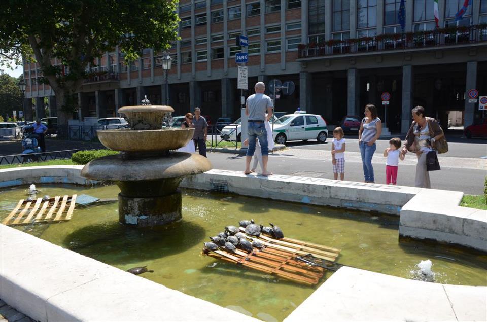 Asti: odissea finita per le tartarughe dei giardini pubblici