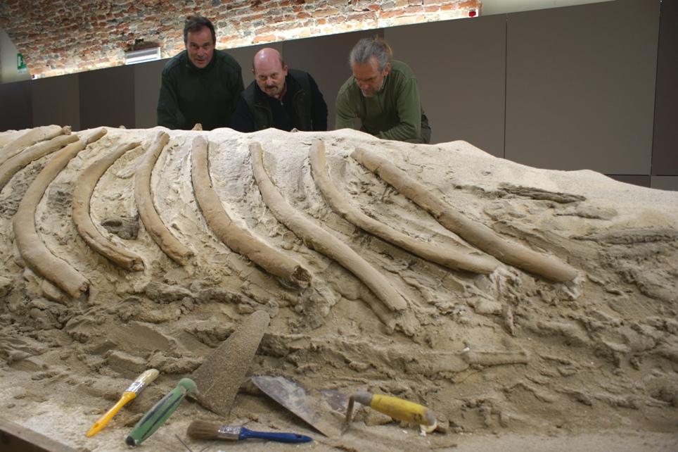Il nuovo Museo Paleontologico sta prendendo forma: in febbraio sarà pronto per i bambini