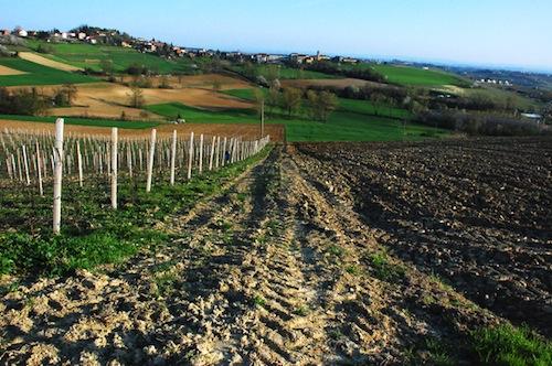 Riordino delle province: approvato il manifesto per la valorizzazione del territorio collinare piemontese