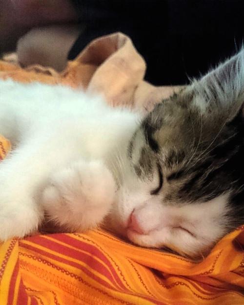 Un animale per amico: appelli e adozioni sulla Gazzetta d'Asti