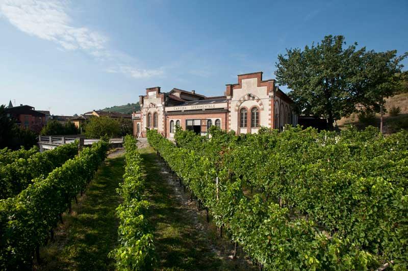 """Ad Alba il seminario """"Wine Skills To Market. Come cambiano le sfide e le competenze delle aziende del vino"""""""