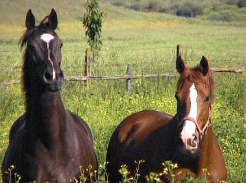 Status di animali d'affezione per i cavalli?