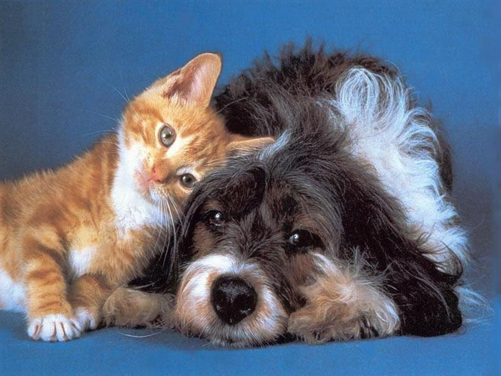Asti, al Palco 19 maratona musicale della Lav per aiutare gli animali in difficoltà