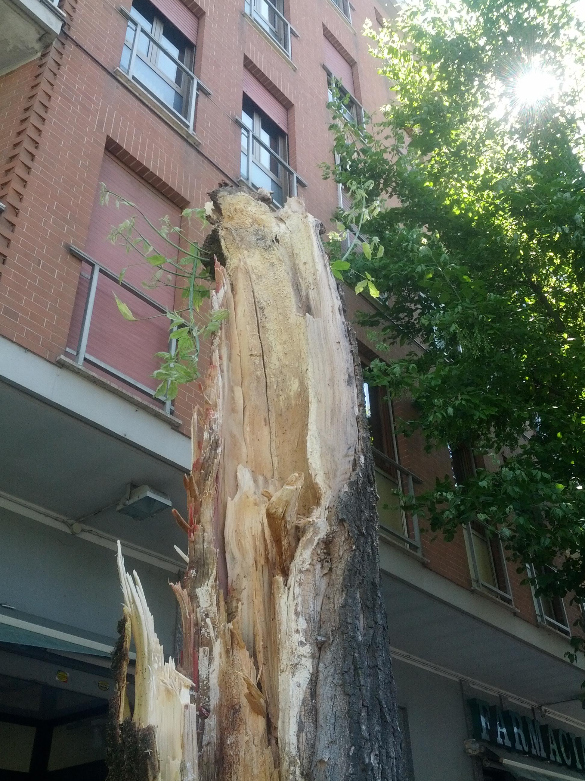 Il forte vento spezza un albero in corso Torino