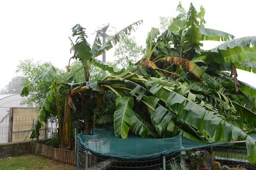 """Piana (LN At): """"Ad ogni calamità naturale il Governo promette aiuti e per l'uragano 2013 si profila l'ennesimo assegno scoperto"""""""