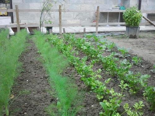 Al via il nuovo progetto per una corretta alimentazione nelle scuole di Nizza Monferrato