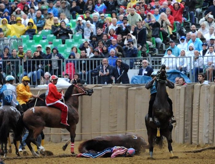Incidente al Palio di Asti, cavallo perde la vita al canapo
