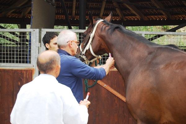 Veterinari dell'Asl AT in prima fila nei controlli sui cavalli del Palio