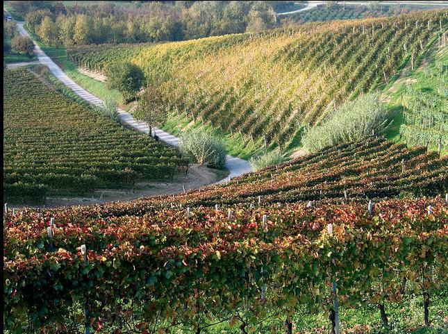 Langhe-Roero Monferrato sito Unesco: la fotogallery