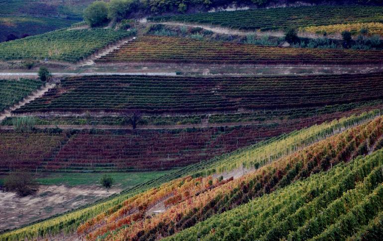 E' ufficiale: Langhe-Roero e Monferrato tra i Siti Culturali Patrimonio dell'Umanità