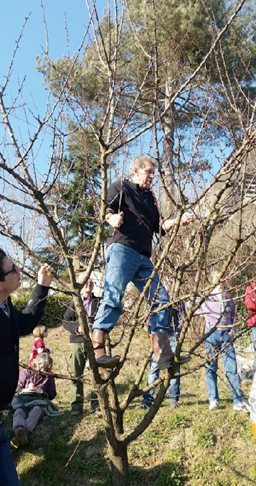 A lezione di potatura e innesto di alberi da frutto con il circolo Legambiente Valtriversa