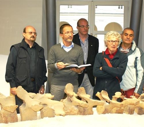 La balenottera di Vigliano torna in terra astigiana 54 anni dopo il suo ritrovamento