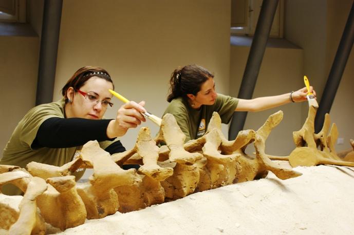 La balenottera di Vigliano appartiene a una nuova specie?
