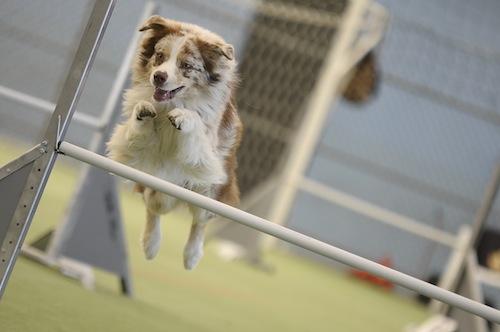 A Portacomaro d'Asti una domenica dedicata all'agility dog