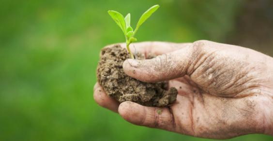 Siglato il documento che definisce le linee guida per lo sviluppo sostenibile degli spazi verdi