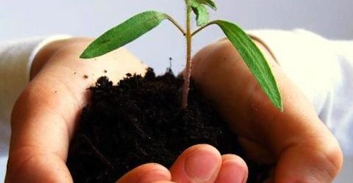 Agricoltura sociale, strumento di welfare partecipato e concreta opportunità economica
