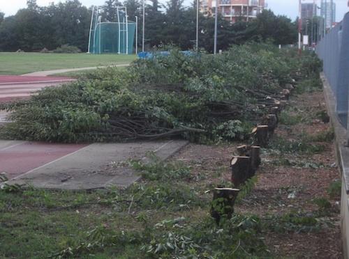 """Abbattimento alberi al palazzetto. Porta: """"Chiediamo all'Amministrazione un incontro aperto"""""""