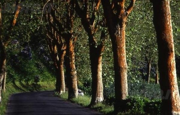 Sottoscritto il patto fra Comune e Provincia per il miglioramento della sicurezza stradale e la salvaguardia degli alberi secolari