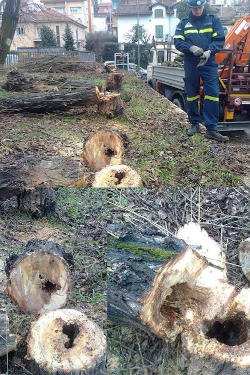 La Provincia di Asti piantuma alberi per ripristinare quelli abbattuti
