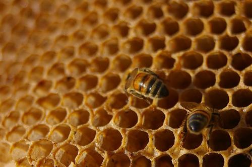 Bando a sostegno degli apicoltori astigiani