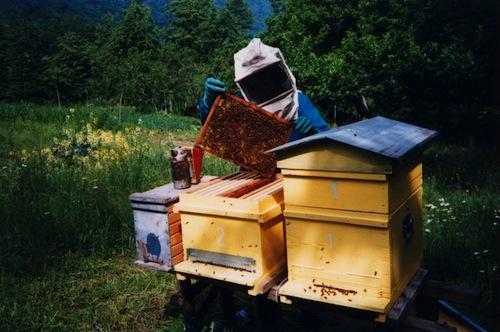 Alla Coldiretti di Asti un corso per diventare apicoltori