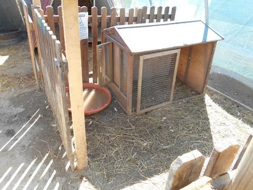 Doppio furto di animali alla fattoria didattica L'Asinergia
