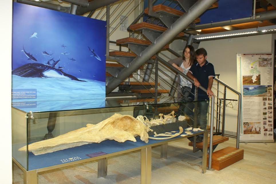 Orario lungo e accesso gratuito al Museo dei fossili per il Settembre Astigiano