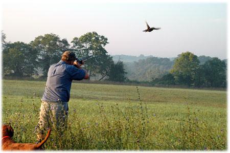 Il MoVimento 5 Stelle interviene sulla decisione dell'assessore Sacchetto di aprire, domenica, la caccia per alcune specie