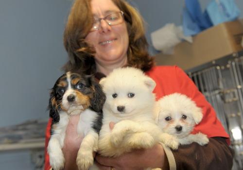 Trovano casa nel carcere di Quarto i cuccioli sequestrati in autostrada
