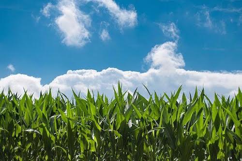 Agricoltura sociale. Confagricoltura Asti capofila per la creazione di una rete tra gli imprenditori rurali