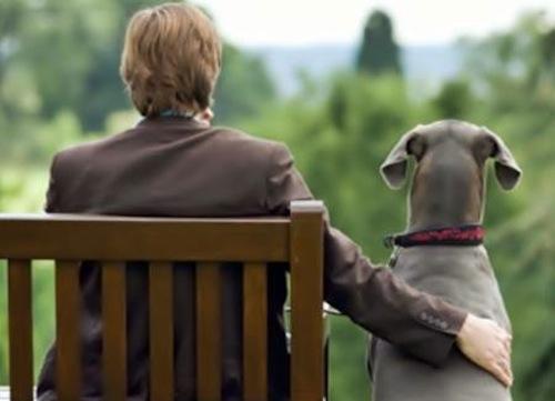 Finisce nella tarppola per la selvaggina: cagnolino salvato dalla sorella
