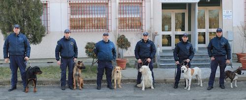 Dai canili al corso per diventare poliziotti a quattro zampe