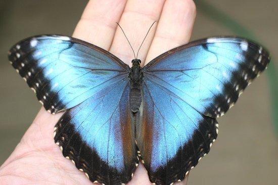 A Valmanera la Giornata delle Farfalle