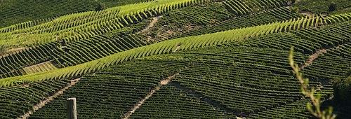 Crisi delle vendite dell'Asti docg: l'Associazione Produttori Moscato avanza proposta in Commissione paritetica