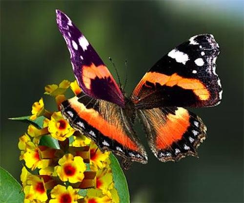 A Villa Paolina la Giornata delle Farfalle