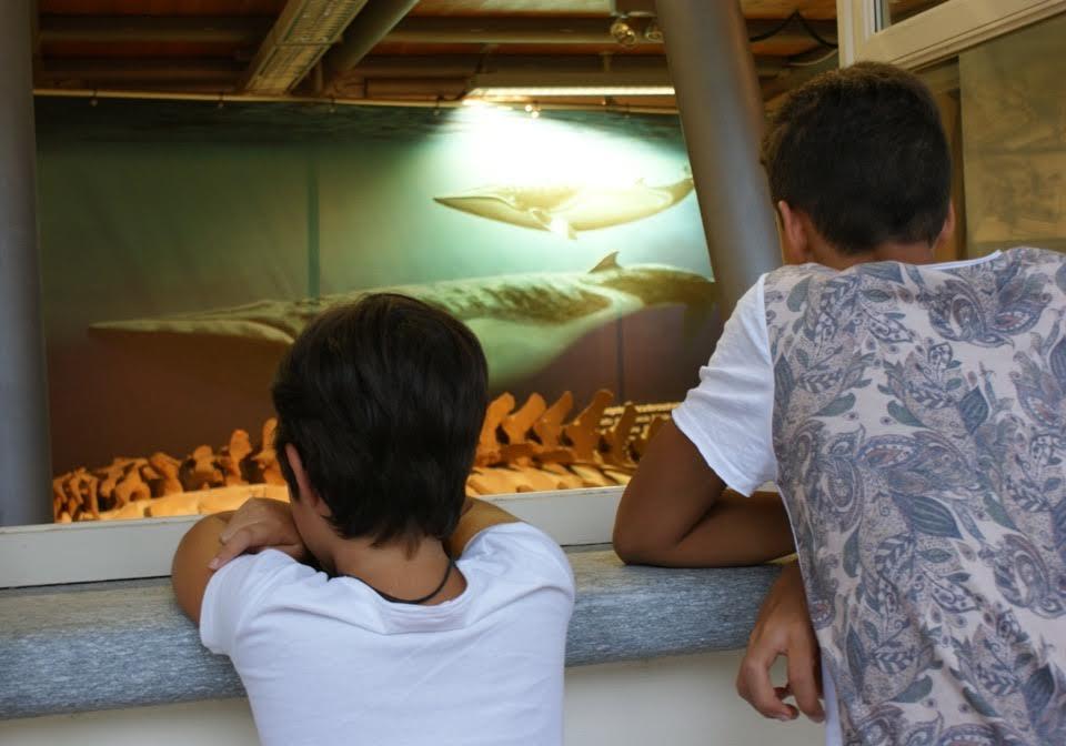 Il Museo dei fossili per i terremotati del Centro Italia