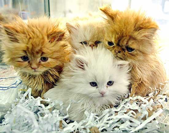 Raccolta di cibo per le colonie feline della città di Asti