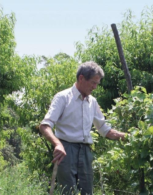 """In memoria di Giuseppe Ratti. Silvia Cotto: """"Ti ringrazio mentre ti immagino già all'opera a coltivare le vigne del cielo"""""""