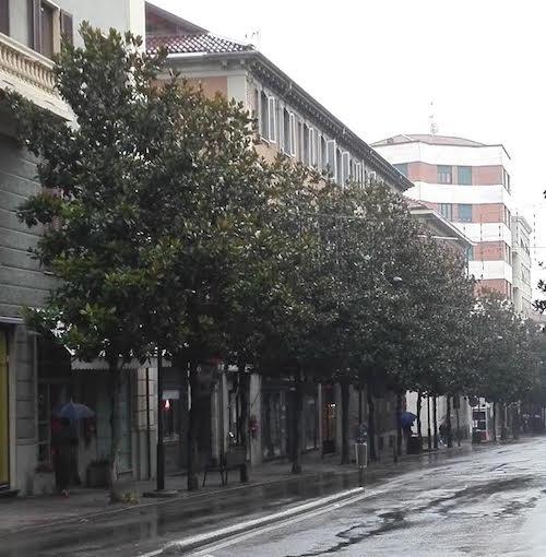 E' iniziata la potatura delle magnolie di corso Dante e dell'albero secolare della stazione