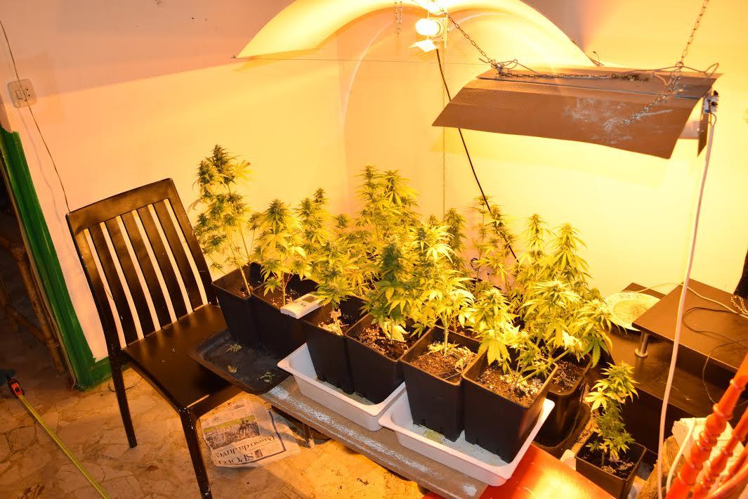 Serra di marijuana in un alloggio: arrestato dalla polizia di Asti