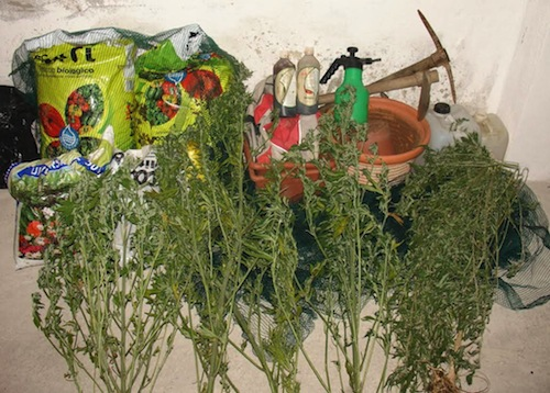 Aveva un orto di marijuana: arrestato dai carabinieri di Cocconato