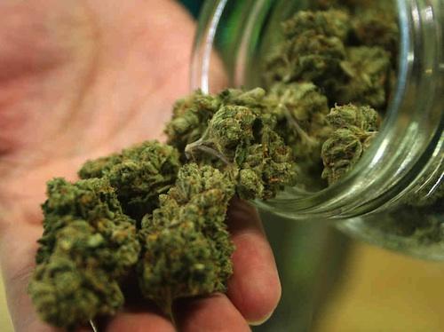 Coltivazione cannabis legale, via libera in Commissione regionale