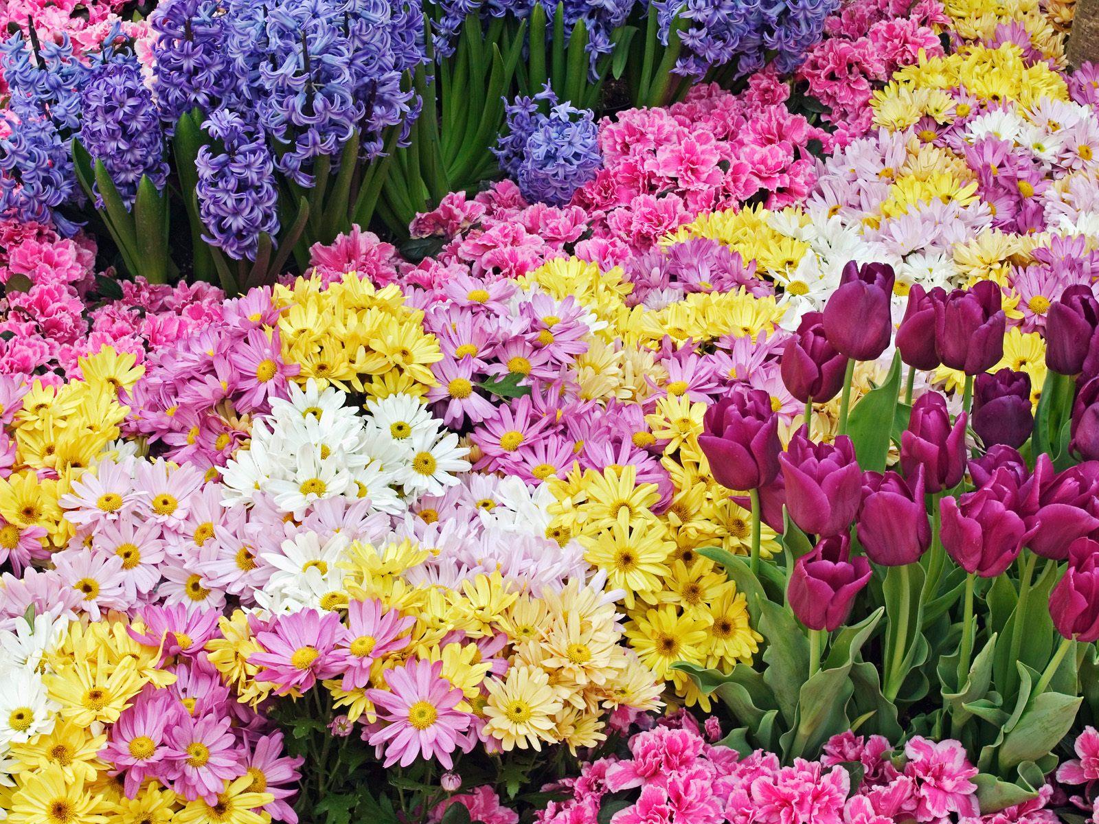 Mercato dei fiori in Campo del Palio