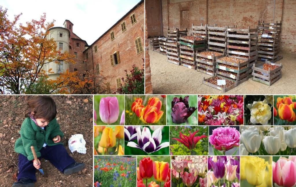 A Pralormo si mettono a dimora i bulbi per Messer Tulipano